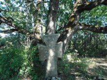 Krst u šumi
