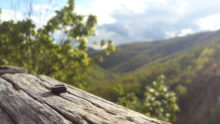 Pogled prirode