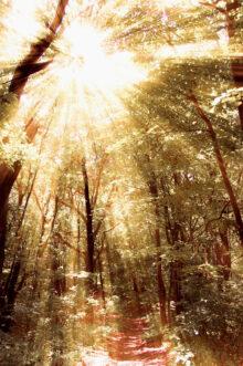 Misteriozna šuma