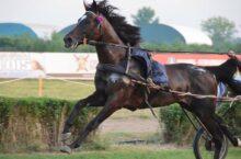 Konj u sulkama