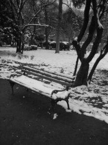 samoca u parku