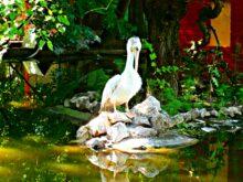 Poseta Zoo Vrtu